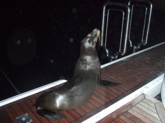 Seal on Board